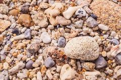 De dode vorm van de koraalbloem, bij Kalim-baai, Phuket, Thailand Stock Afbeelding