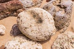 De dode vorm van de koraalbloem, bij Kalim-baai, Phuket, Thailand Stock Afbeeldingen