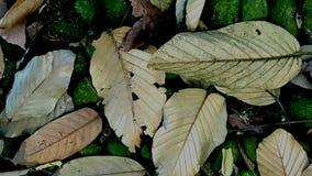 De doden verlaten het liggen op de tropische bosvloer Stock Fotografie