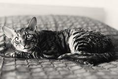 De doen schrikken kat met afluisteraar ligt op een bed royalty-vrije stock afbeeldingen