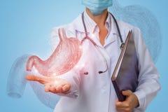 De dokter toont een schets van de menselijke maag stock fotografie