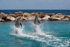 De dolfijn toont royalty-vrije stock foto's