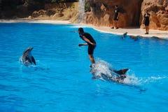 De dolfijn toont Stock Foto