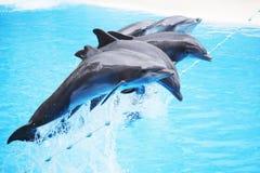 De dolfijn toont Royalty-vrije Stock Afbeeldingen