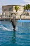 De dolfijn toont royalty-vrije stock fotografie