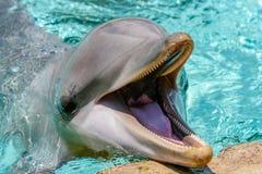 De dolfijn toont op zee Wereld royalty-vrije stock fotografie