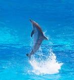 De dolfijn van Bottlenose Stock Foto
