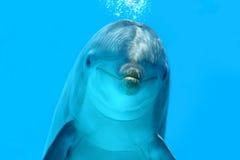 De dolfijn ziet eruit Royalty-vrije Stock Afbeelding