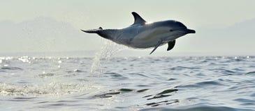 De dolfijn zwemt en springend van het water Royalty-vrije Stock Foto's