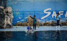 De dolfijnen bij het creatieve onderhouden tonen Royalty-vrije Stock Fotografie
