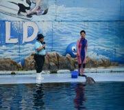 De dolfijnen bij het creatieve onderhouden tonen Royalty-vrije Stock Foto
