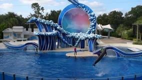 De dolfijnen die van Nice in show in Seaworld springen