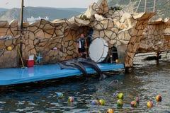 De dolfijnen houden een loterij onder het publiek Stock Foto's