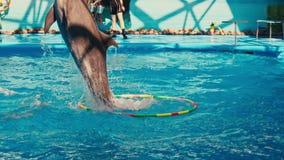 De dolfijnen presteren in Dolphinarium stock videobeelden