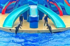 De dolfijnen tonen bij oceaanpark Hongkong Stock Afbeeldingen
