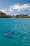 De Dolfijnen van de spinner Stock Afbeeldingen
