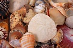 De dollar en overzeese van het zand shells stock afbeelding