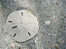 De dollar van het zand stock foto's