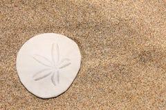 De dollar van het zand op het strand Stock Afbeeldingen