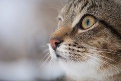 De domastic kat zoekt vijanden royalty-vrije stock foto's