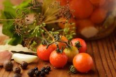 De domeinen van tomaten Stock Fotografie
