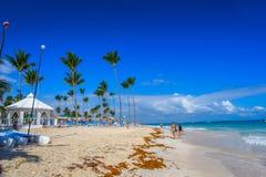 De Dominicaanse republiek Zandige strand en sargas royalty-vrije stock foto