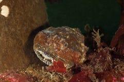De Donderpad van Buffelo Stock Afbeeldingen