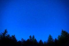 De donkerblauwe bomen van de nachtpijnboom over hemel Stock Afbeeldingen