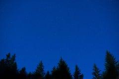 De donkerblauwe bomen van de nachtpijnboom over hemel Royalty-vrije Stock Foto