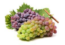 De donkerblauwe, gele, groene en rode druif ligt en bladeren Stock Foto's