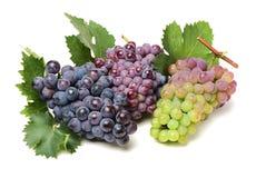 De donkerblauwe, gele, groene en rode druif ligt en bladeren Stock Fotografie