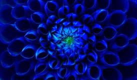De donkerblauwe macrofoto van de dahliabloem Stock Foto's