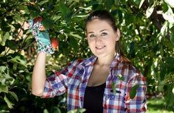 De donkerbruine vrouw in tuin gloves het plukken appelen van boom Royalty-vrije Stock Afbeeldingen