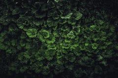 De donkere aard van het de lente groene blad backgrond, hoogste mening Stock Afbeelding