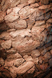 De donkere achtergrond van de boomschors Textuur Stock Foto