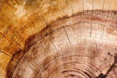 de donkere achtergrond van de Californische sequoiatextuur Stock Fotografie