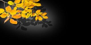 De donkere achtergrond van de de herfstaard Stock Foto