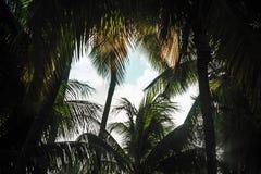 De donkere achtergrond van het kokospalmenkader Stock Afbeelding