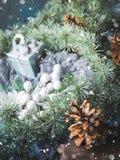 De donkere achtergrond van de Kerstmiswinter met decor Stock Fotografie