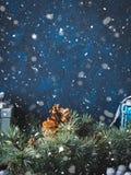 De donkere achtergrond van de Kerstmiswinter met decor Royalty-vrije Stock Foto