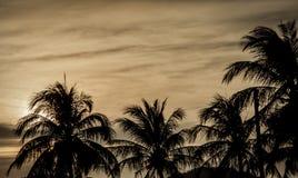 De donkere achtergrond van de zonsondergangaard Stock Afbeeldingen