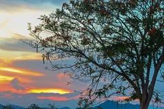 De donkere Bewolkte Schemering op Hemel, Mooie zonsondergang, betrekt kruis op onscherpe zonsondergang en Flam-boyant, de Vlamboo Royalty-vrije Stock Foto's