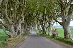 De donkere bomen en de weg van de Hagen oude Beuk in Ierland Stock Afbeelding