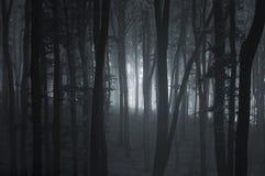 De donkere bomen van de misttrog in bos Royalty-vrije Stock Afbeeldingen