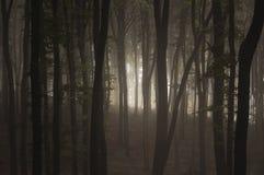 De donkere bomen van de misttrog in bos Stock Foto