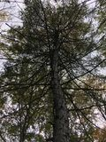 De donkere boom, bekijkt omhoog Vroeg de herfstbos Royalty-vrije Stock Fotografie
