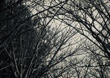 De donkere boom en de installaties isoleerden natuurlijke objecten foto Stock Foto's