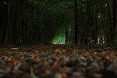 De donkere bos binnen behandelde weg doorbladert het leiden tot glanzend eind van boomtunnel royalty-vrije stock afbeeldingen