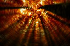 De donkere bos, grote beukbomen in de herfsthout Royalty-vrije Stock Fotografie