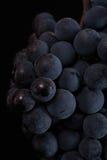 De donkere bos van druif in laag licht op zwarte achtergrond, macroschot, water daalt Royalty-vrije Stock Foto's